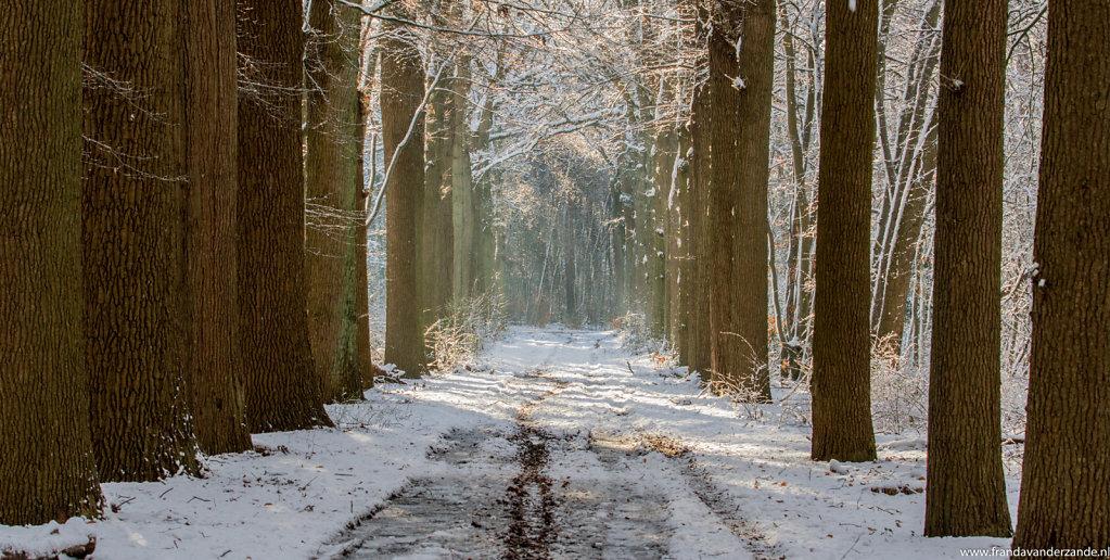 winters-bos-021.jpg