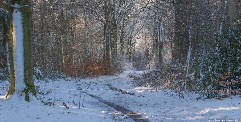 winters-bos-115.jpg