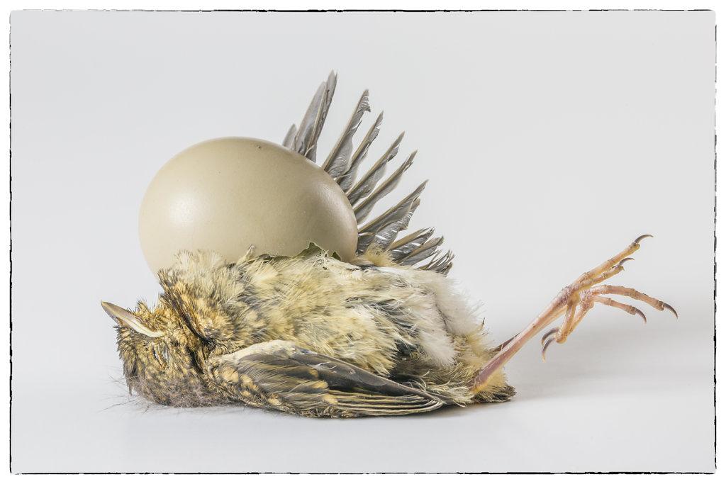 baby-vogel-016-bewerkt-2.jpg